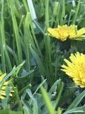 Gele bloemenclose-up Royalty-vrije Stock Foto