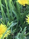 Gele bloemenclose-up Stock Fotografie