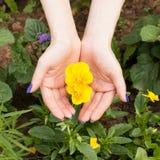 Gele bloemenclose-up in handen Stock Afbeelding