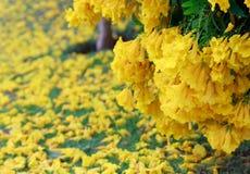 Gele bloemendaling op natuurlijk groen gebied Royalty-vrije Stock Afbeelding