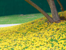 Gele bloemendaling op natuurlijk groen gebied Royalty-vrije Stock Afbeeldingen