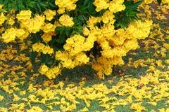 Gele bloemendaling op natuurlijk groen gebied Stock Foto's