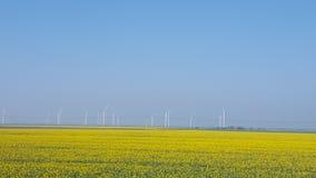 Gele Bloemengebieden Stock Foto's
