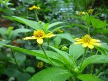 Gele bloemenhermosos y adorables royalty-vrije stock afbeeldingen