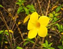 Gele bloeminstallaties Stock Foto