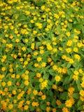 Gele bloemtuin Stock Foto