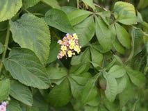 Gele bloemtuin Royalty-vrije Stock Afbeeldingen