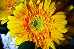 Gele bloesem in een boeket royalty-vrije stock afbeeldingen