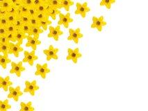 Gele bloesems op witte achtergrond Royalty-vrije Stock Afbeelding