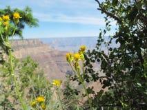 Gele Bloesems tegen een Vaag Grand Canyon -Uitzicht royalty-vrije stock foto's