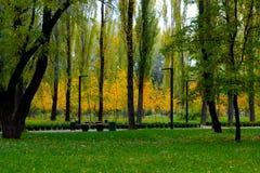 Gele Bomen stock foto's