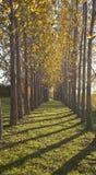 Gele bomen in daling stock foto's