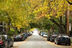 Gele bomen in een straat van Montreal royalty-vrije stock foto's