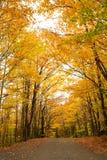 Gele bomen over een landelijke weg royalty-vrije stock foto