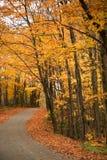 Gele bomen over een landelijke weg stock afbeeldingen