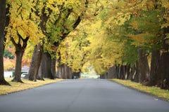 Gele boom in de herfstseizoen stock afbeeldingen