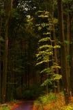 Gele boom door de weg Stock Fotografie