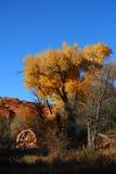 Gele boom en watermolen Stock Afbeelding