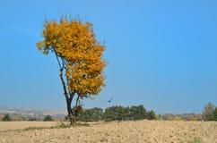 Gele boom met kraaien royalty-vrije stock fotografie