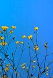 Gele boterbloemen op een blauwe hemelachtergrond Royalty-vrije Stock Afbeeldingen
