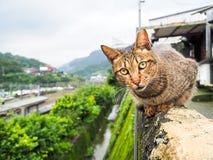 Gele bruine kat Stock Afbeeldingen
