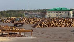 Gele bulldozer met logboeken, bulldozer met logboeken bij een zaagmolen, moderne zaagmolen stock video