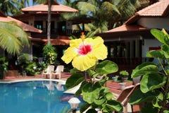 Gele carcadebloem op de tropische meningsachtergrond stock afbeeldingen