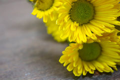 Gele chrysantenachtergrond Royalty-vrije Stock Foto