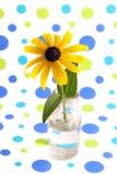 Gele coneflower. Stock Foto's