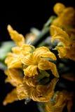 Gele courgette eetbare bloemen stock foto's