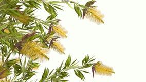 Gele 3D bloem Stock Afbeelding