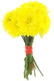 Gele dahlia's Stock Foto