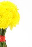 Gele dahlia's Stock Foto's