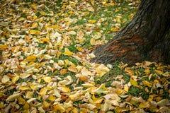 Gele dalingsbladeren door een boomboomstam Royalty-vrije Stock Foto