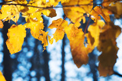 Gele de herfstbladeren stock fotografie