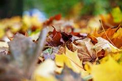 Gele de herfstbladeren Achtergrond Het concept is de herfst Stock Foto