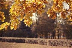 Gele de herfstbladeren stock foto