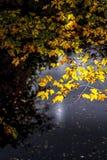 Gele de herfstbladeren met donkere achtergrond en zon royalty-vrije stock afbeelding