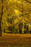 Gele de herfstdag bij het park Royalty-vrije Stock Fotografie