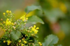 Gele de lentebloemen Stock Afbeelding