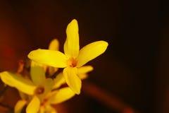 Gele de lentebloemen stock foto's