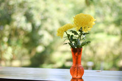 Gele de lentebloemen Stock Foto