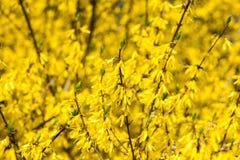 Gele de lentebloemen op groen stock foto