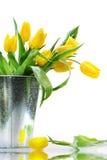 Gele de lentetulpen Stock Afbeeldingen