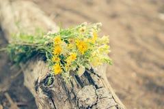 Gele de zomerversheid van het wildflowersboeket Royalty-vrije Stock Foto's