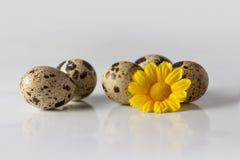 Gele decoratieve bloem en patrijseieren Royalty-vrije Stock Afbeeldingen