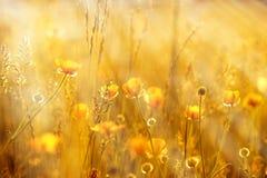 Gele die bloemen door zonstralen worden aangestoken Royalty-vrije Stock Foto's
