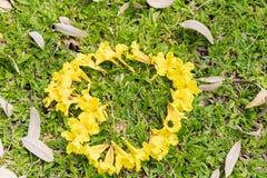 Gele die bloemen in een hartvorm worden geschikt Royalty-vrije Stock Afbeelding