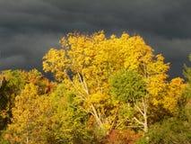 Gele die boombladeren in de voorgrond, onweersbuiwolken erachter worden verlicht Royalty-vrije Stock Afbeelding