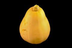 Gele die butternutpompoen, op zwarte Cucurbita-moschata wordt geïsoleerd Stock Foto's